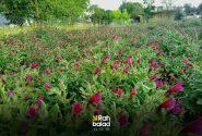 حیات رویداد بهاری با رویش گیاهان در دامنه الوند